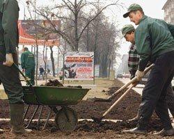 Moskvada çəmən saldılar, konoplya  çıxdı