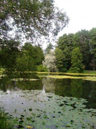Kuzminki parkının meşəsi