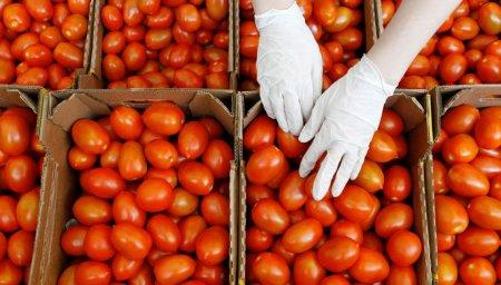 Nəhayət türk pomidoru Rusiya bazarına qayıdır